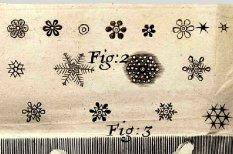 Micrographia sketch
