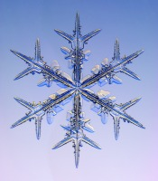 http://www.its.caltech.edu/~atomic/snowcrystals/photos/x031230a077.jpg